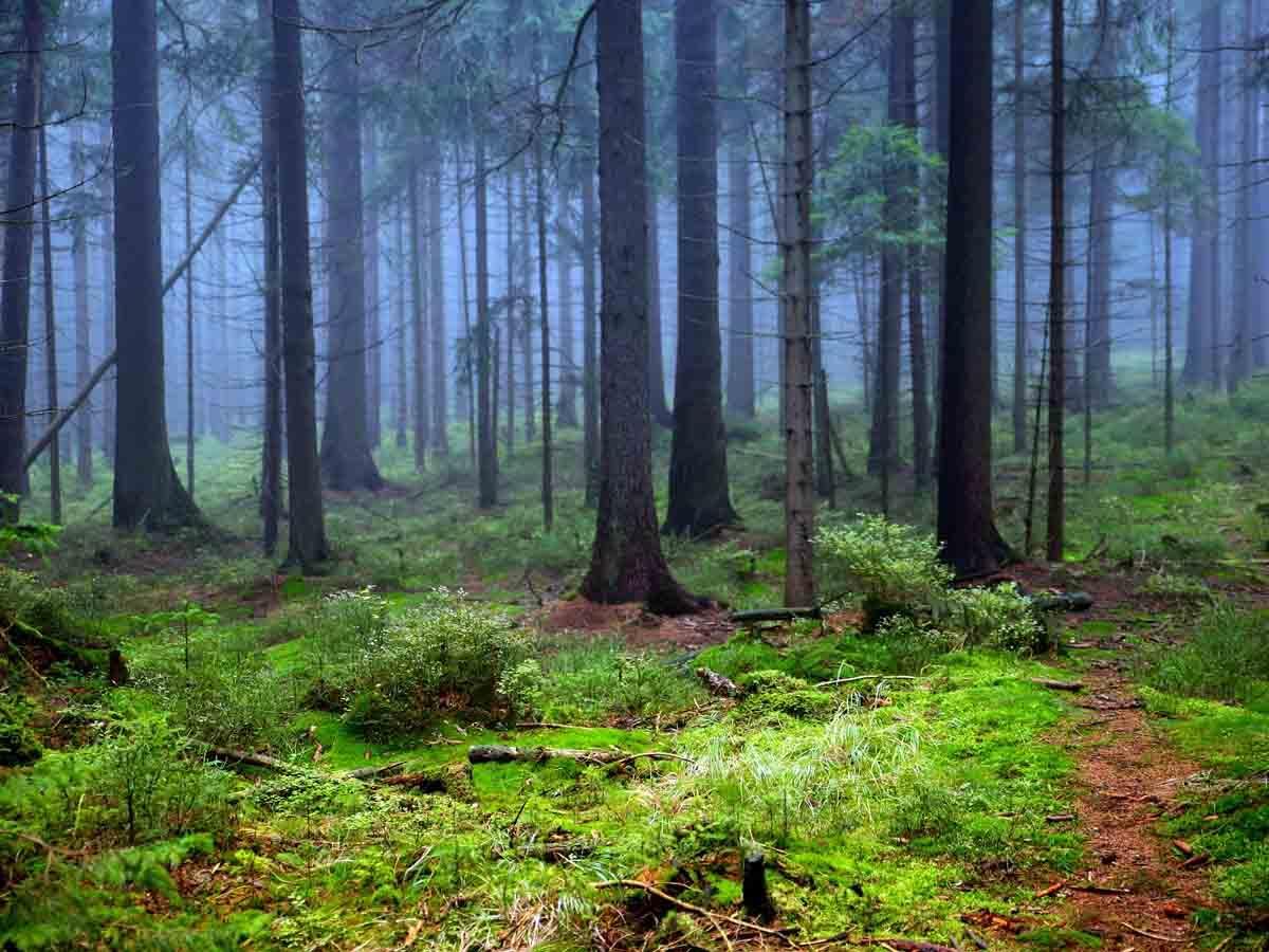 Provenienza del legname