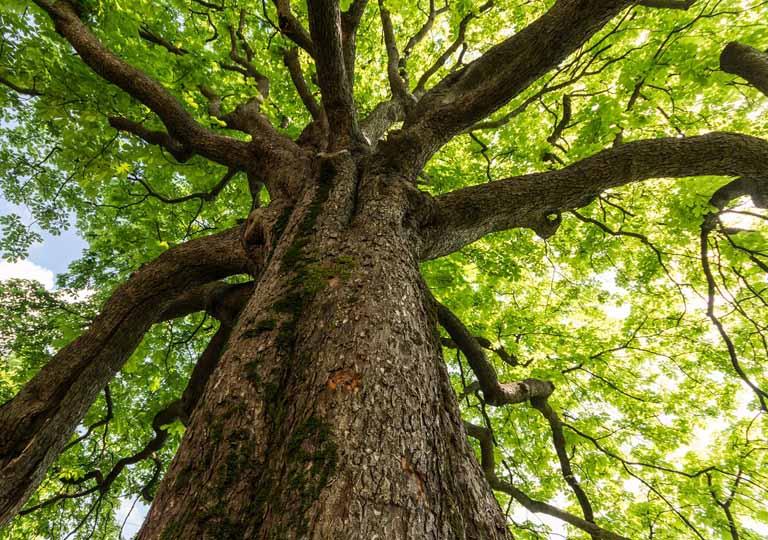 Parquet: tutto comincia dall'albero, per questo ha molto da raccontare