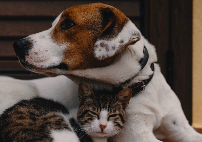 Parquet e animali domestici? Si può ed è semplice
