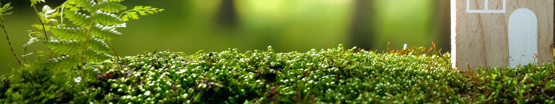 Quando il parquet diventa aromaterapia: terpeni, gli aromi del benessere